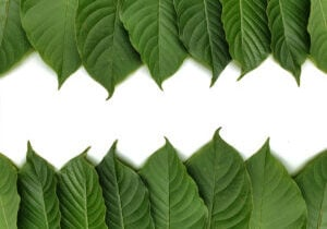 kratom leaves border
